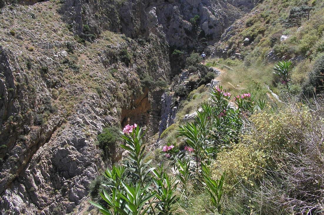 haut-gorge-messonas-sentier-botanique-kavousi-alsace-crete