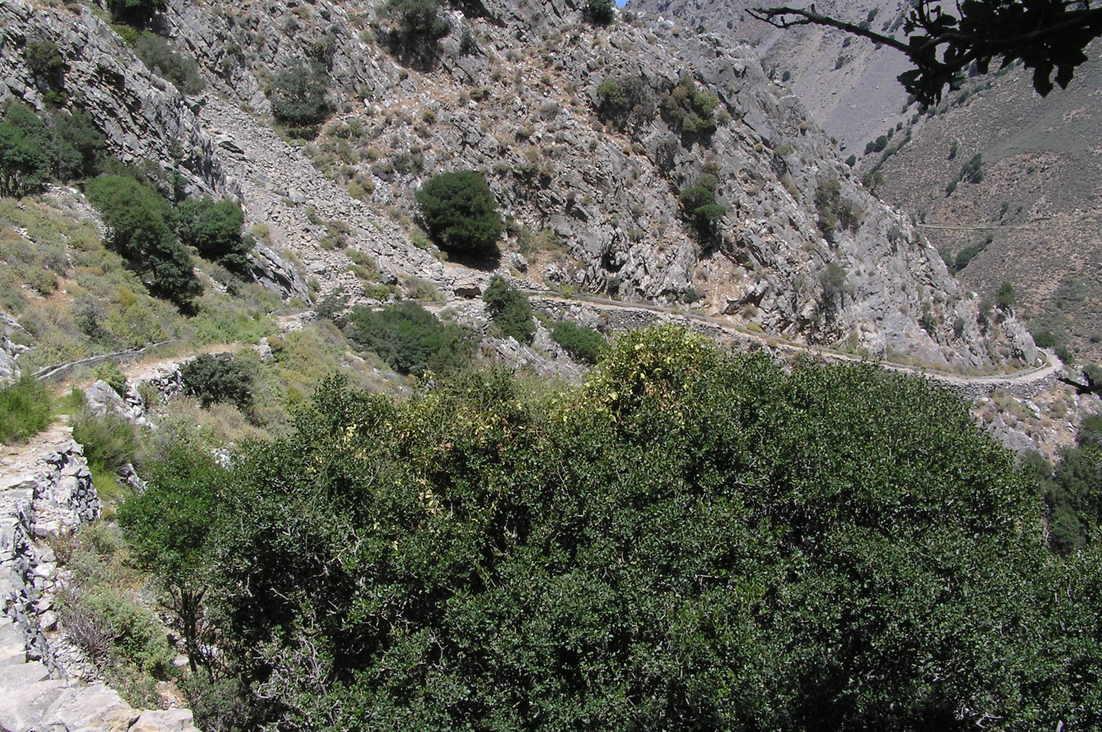 sentier-botanique-kavousi-alsace-crete